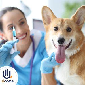 vacunacion-mascotas-quito